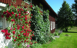 Lodge and Flowers